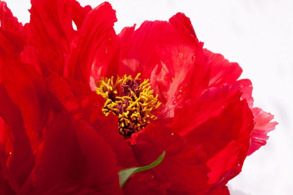 De Kleur Rood : Vandaag is roodu